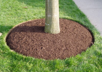 Correct Mulch Placement